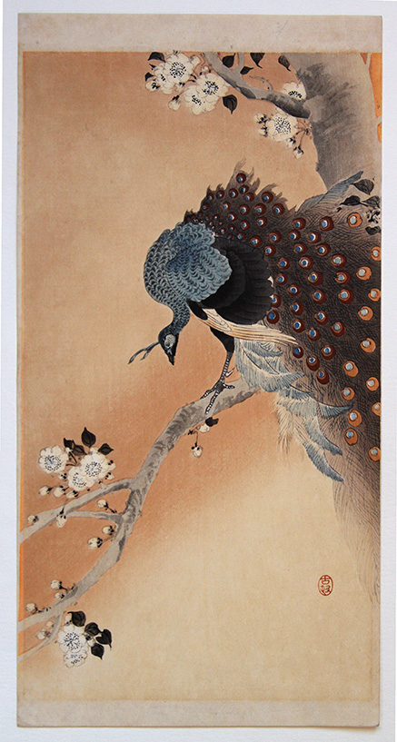 Ohara KOSON Peafowl on flowering Cherry Blossom Branch