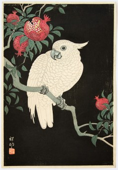 Ohara KOSON (1877-1945) - Cackatoo and pomegranate at night