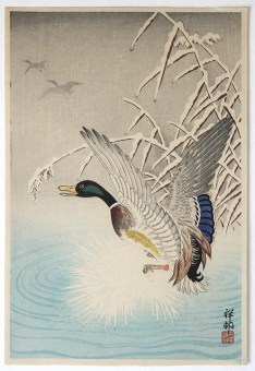 Ohara KOSON Duck in Winter