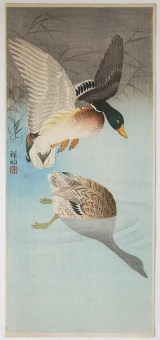 Ohara KOSON Two wild ducks near water, reeds behind