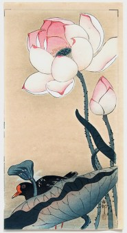 Ohara KOSON Gallinule with Lotus Flowers