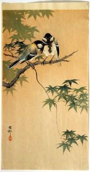 Koson_Tits_maple_B049_web