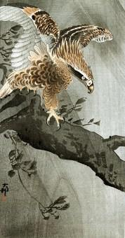 Koson_eagle_on_trunk_B014
